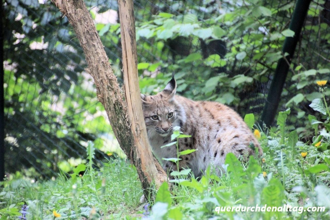Bayerwald-Tierpark in Lohberg