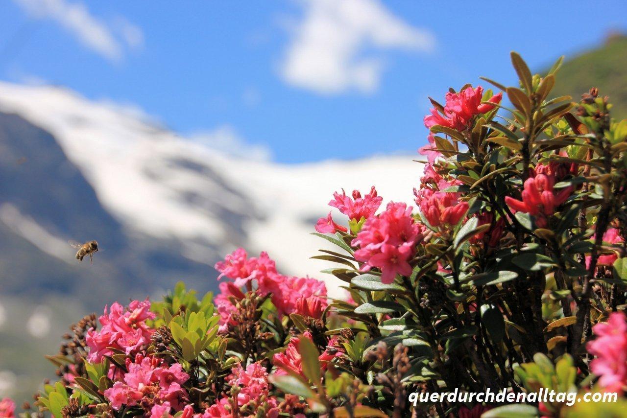 Morteratsch Bernina Alp Grüm Cavaglia