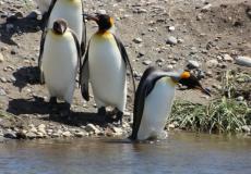 Parque Pinguino Rey Bahia Inutil