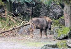Tierpark Goldau