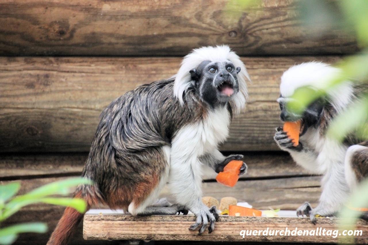 Tonis Zoo Rothenburg Luzern