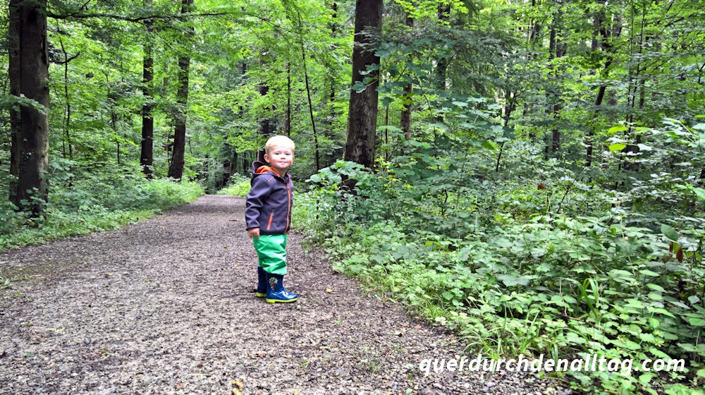 Sonntagsspaziergang Pfaffhausen Wald