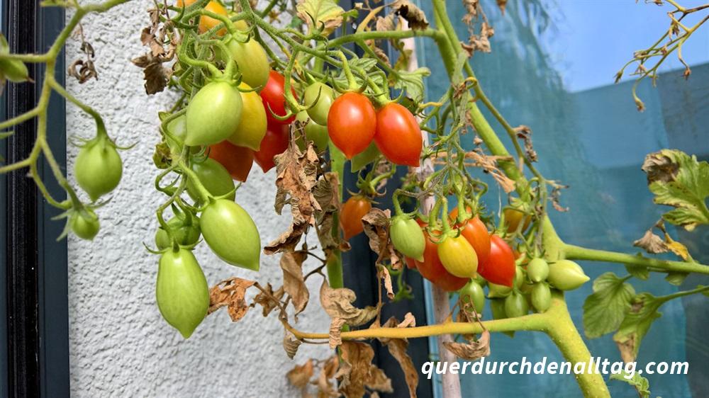 Garten Pflanzen Herbstgrüsse