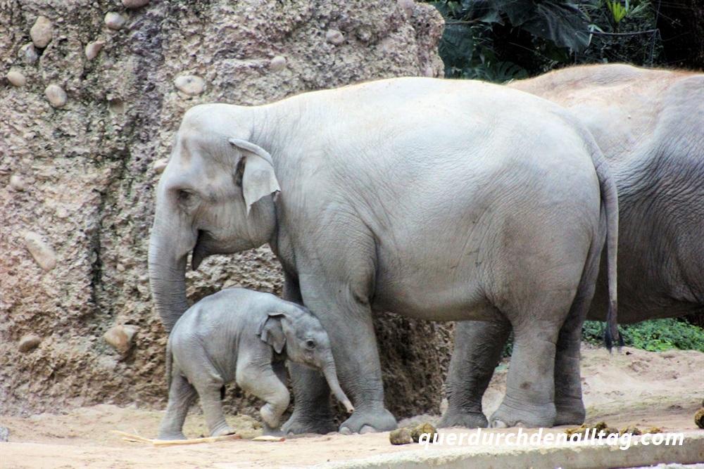 Nachwuchs Elefant Zoo Zürich