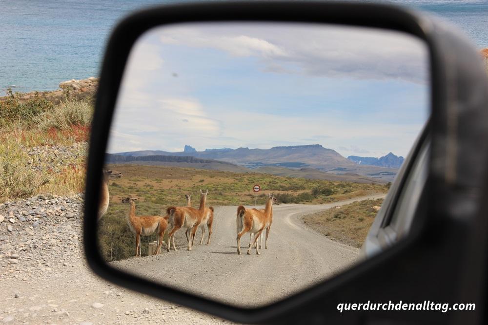 Patagonien Guanako