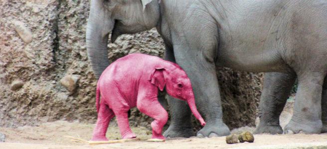 Elefant Martin Suter