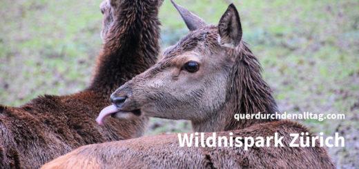 Wildnispark Zürich Langenberg Rothirsch