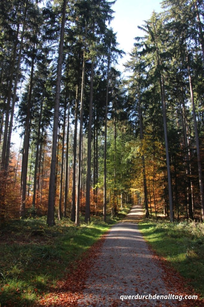 Bewegung Laufen Herbst Geniessen