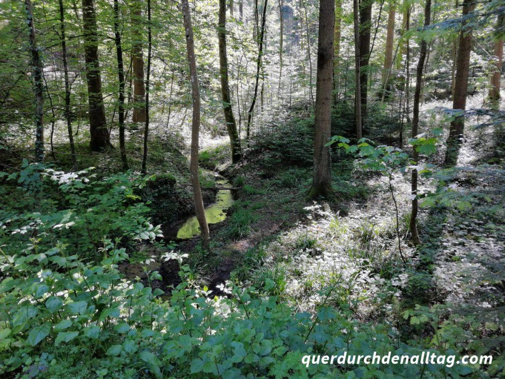 Wald Pfaffhausen