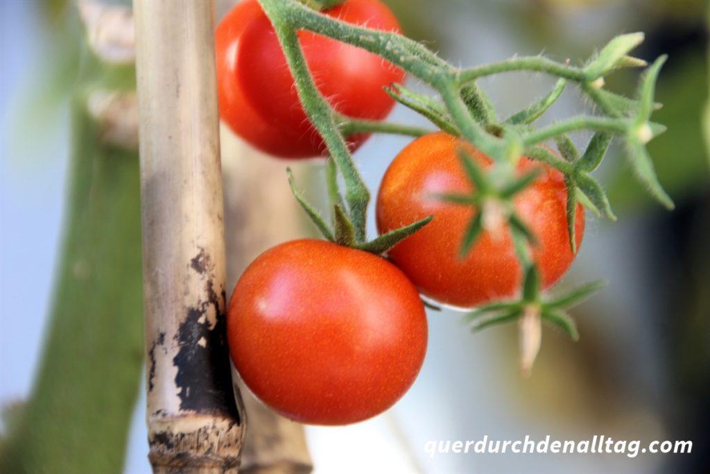 Garten Gemüse Tomaten