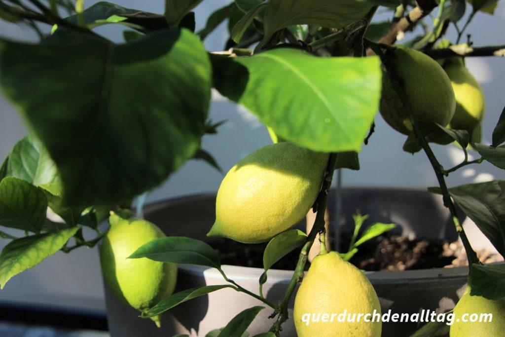 Garten Gemüse Zitronen