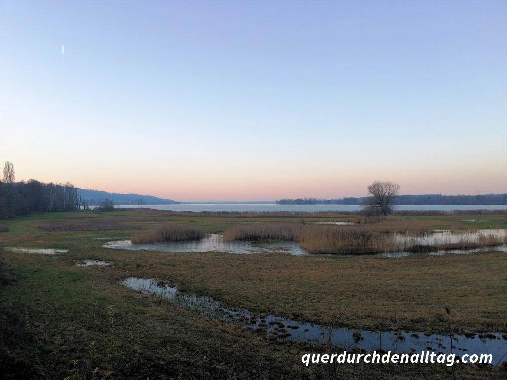Bewegung Laufen Greifensee Silberweide