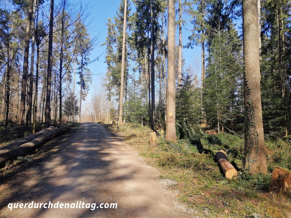 Laufgedanken Pfaffhausen Wald